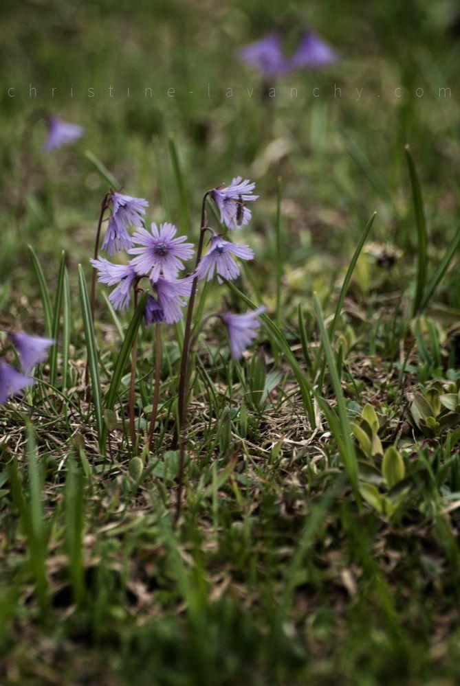 printemps 3
