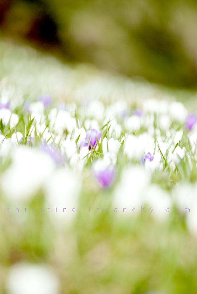 printemps 5
