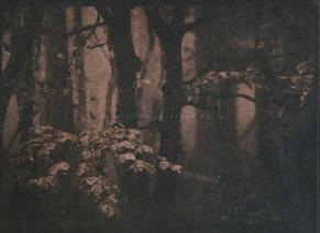 cyanotype sur papier, virage au thé, A4, 2017